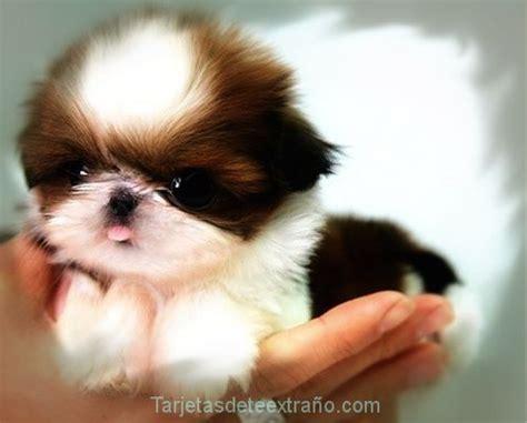 imagenes de animales juguetones bellos perritos tiernos en im 225 genes para pantalla