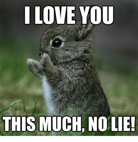 I Love You Meme - love you animal meme www pixshark com images galleries