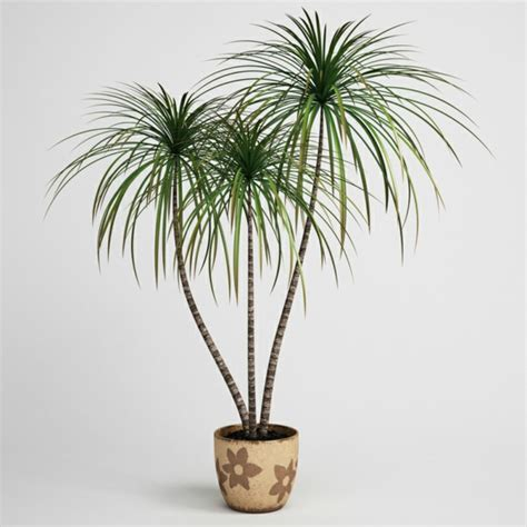 best plants for dark rooms suitable plants for dark rooms fresh design pedia