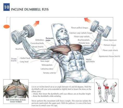 incline bench muscles dumbbell incline bench flys peak fat loss and fitness