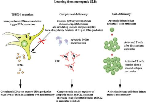 schematic views of monogenic sle pathogenesis