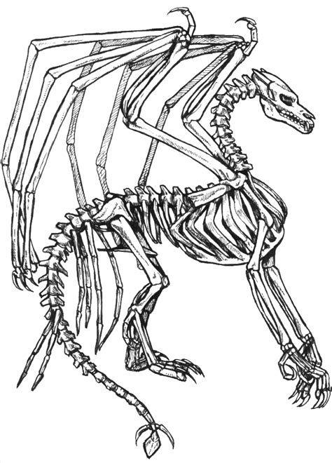 skeleton dragon coloring page free skeleton coloring pages az coloring pages