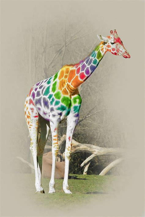 rainbow giraffe  kitty bitty redbubble