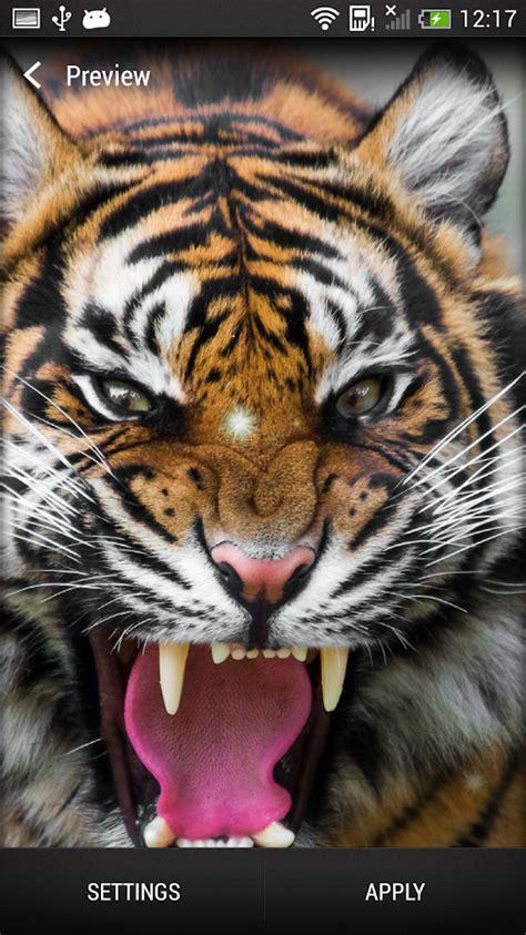 imagenes en 3d de tigres imagenes de tigres de bengala en 3d con movimiento imagui