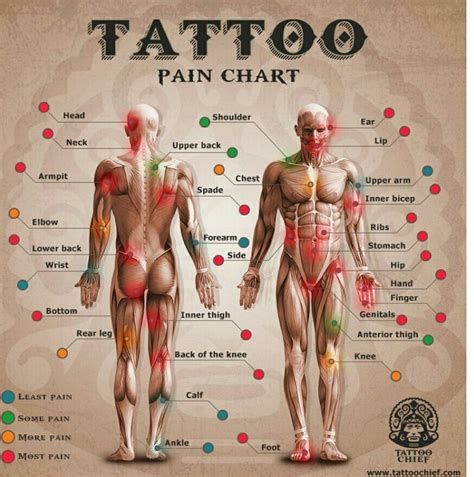 tattoo back pain 25 best ideas about tattoo pain chart on pinterest