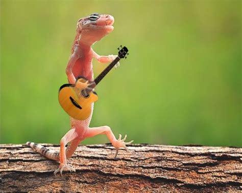 Animal Guitar animals guitar www pixshark images