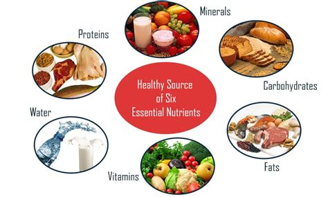 healthy fats nutrients 5 essential nutrients most lack in their diets
