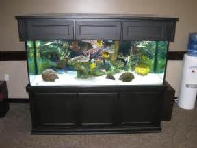 Aquarium Designs by 55 Gallon Aquarium Design Images Amp Pictures Becuo