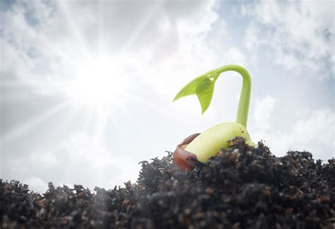 Garden Seeds by I M Called To Plant This Seed In The Soil He Has Called
