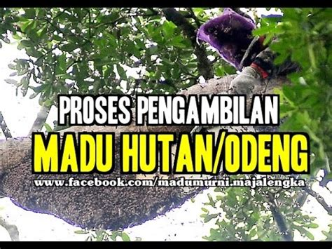 Madu Odeng By Oriflame madu odeng top songs trailer