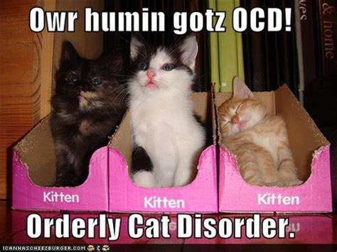 Funny Ocd Memes - crazy kitty quotes quotesgram