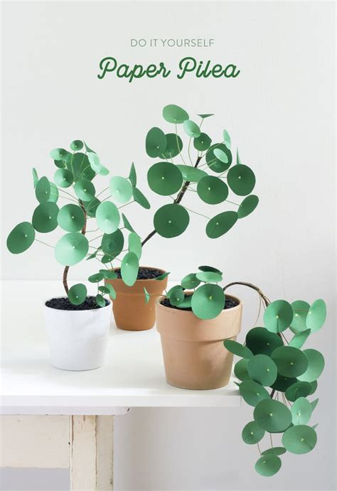 Which Plant Is Used To Make Paper - 176 best houseplants paper images on paper