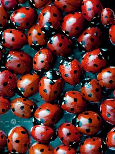 ladybugs in bathroom ladybugs in bathroom 28 images buy ladybug decor 2