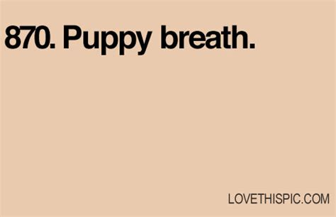 puppy breath 870 puppy breath pictures photos and images for and