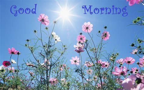 wallpaper free download good morning free best good morning hd wallpapers download