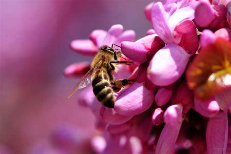 sfondi desktop fiori primavera primavera sfondi 46 immagini