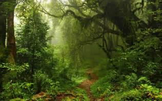 new map theme jungle rainforest black desert online green trees wall mural forest wallpaper wallpaperink co uk