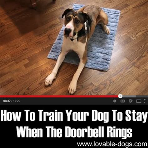 How To Teach Your To Stay The by Lovable Dogs How To Your To Stay When The