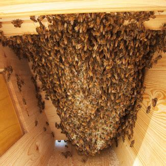 top bar beehive plans mother earth news a season in the life of top bar beekeeping homesteading and livestock mother earth