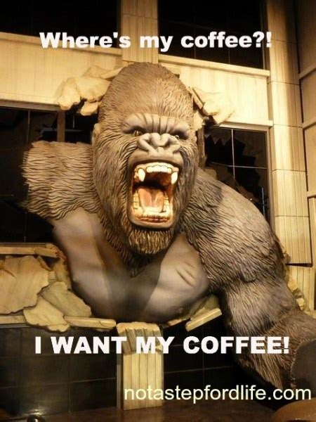 Funny Coffee Memes - adorable and funny animal coffee memes friday frivolity