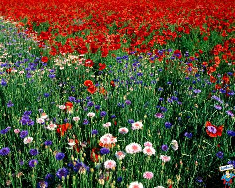 foto di prati in fiore foto prati di fiori 81 foto in alta definizione hd