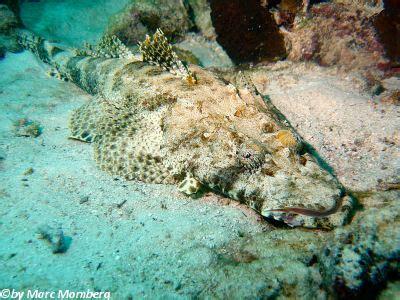 teppich krokodilfisch aruk talata hurghada