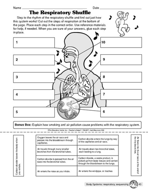 Systems Matching Worksheet by The Respiratory Shuffle The Mailbox Fruit