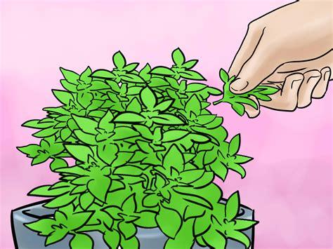 lights to grow herbs indoors 3 ways to grow herbs indoors under lights wikihow