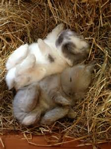 Cute animals baby bunnies bunny rabbits wild wildlife species planet