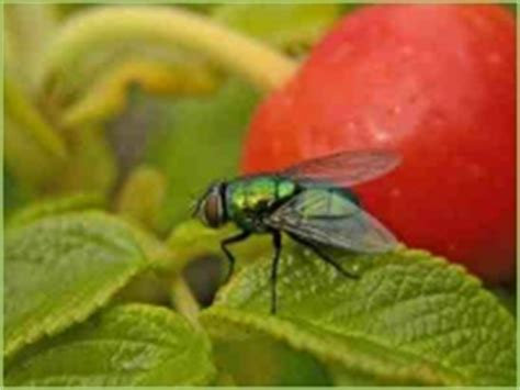 Kellerasseln Fressen Pflanzen by Pflanzenschutz Garten Unkraut Insekten Dein Bauernhof
