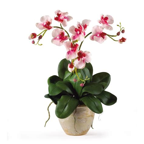 nearly mini phalenopsis silk orchid flower