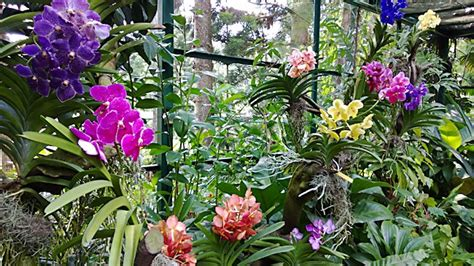 Orchid Botanical Garden Home Orchid Garden The General Requirements Interior Design Inspiration