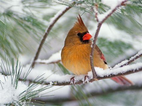 download winter birds wallpaper 1600x1200 wallpoper 403101