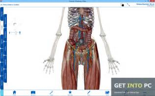 Related pictures anatomy of the human body by robertt desktop 1024x768