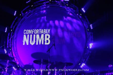Comfortably Numb by Comfortably Numb Canada S Pink Floyd Show T Mak World