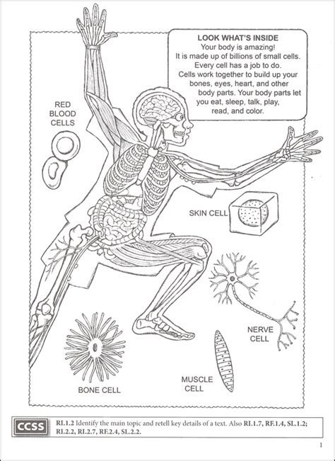 human anatomy coloring book dover my human coloring book boost series details on