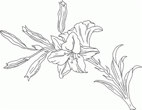 tiger lily coloring page lily flower coloring pages coloring home