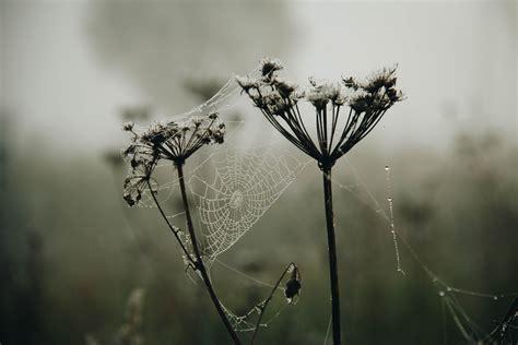 gambar alam fotografi monokrom hitam  putih satu