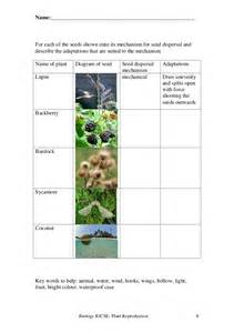 plant diagram worksheet plant get free image about