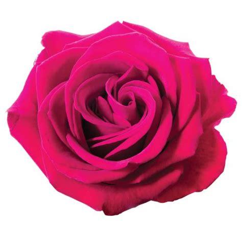 hot pink rose tattoo pink on white background tattoos pink