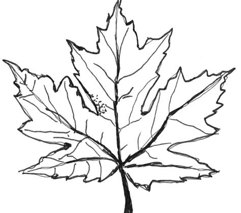 Maple Leaf Coloring Page by Maple Leaf Coloring Maple Leaf Coloring