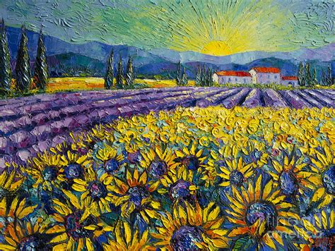 sunflowers and lavender field the colors of provence