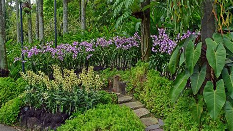 singapore botanic gardens and national orchid garden