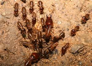 How To Get Rid Of Ants In The Backyard Six Signs Of Termites In Your Home Homesource