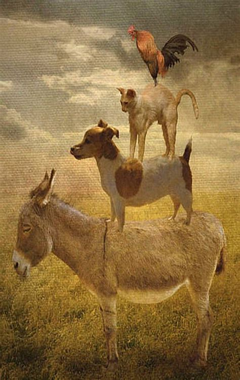 donkey dog cat rooster donkey pinterest donkey