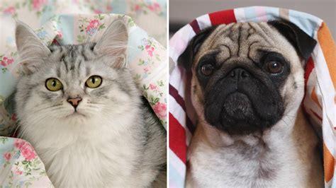 katze zuckt beim schlafen haustiere warum katze und hund im bett nichts verloren