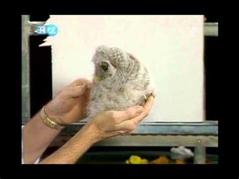 bob ross painting owls bob ross baby owl
