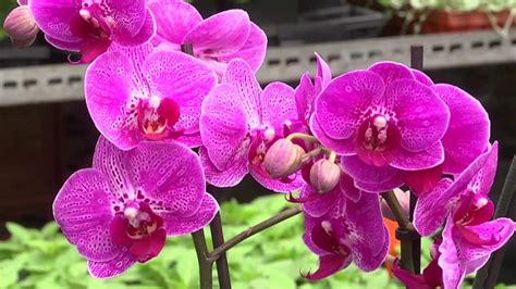 best 28 caring for your orchids useful caring