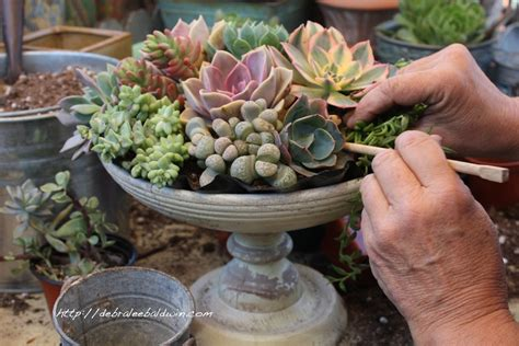 succulents look weak and facing down how to make a succulent centerpiece