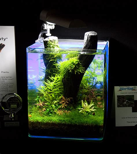 Oliver Knott Aquascaping by Quot Black Quot 20 Liter By Oliver Knott Photo Oliver